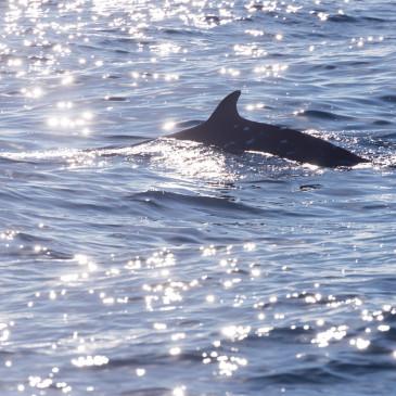 銚子で沖合クジラウォッチング