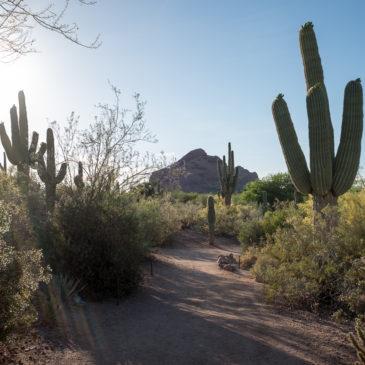 フェニックス 砂漠のサボテンとハチドリと