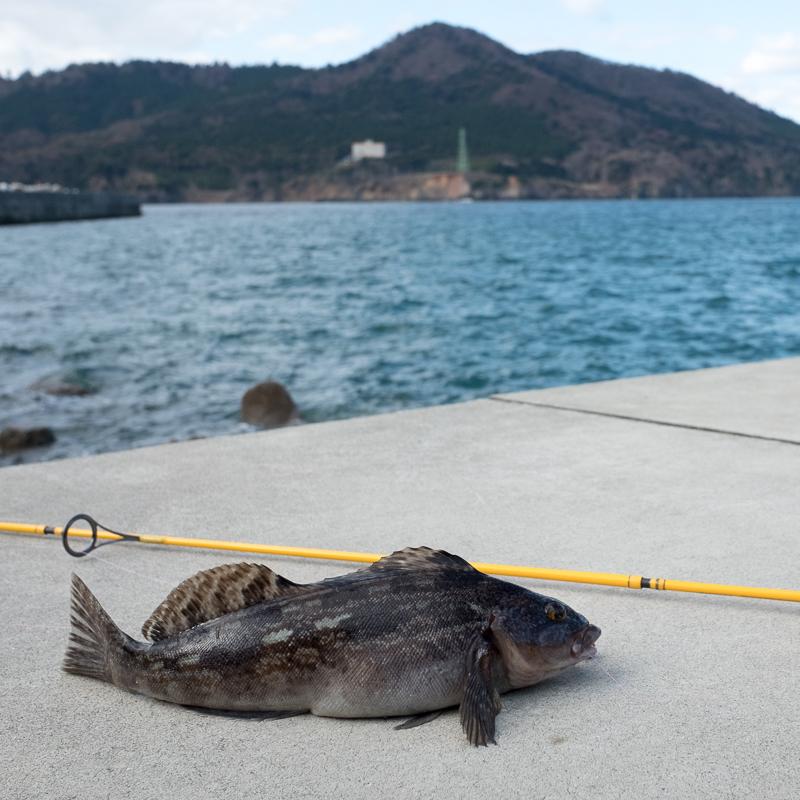 金華山 チョイ釣りでアイナメ