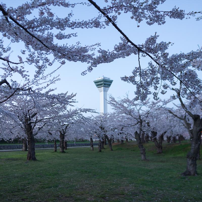 五稜郭の桜と朝の函館散策