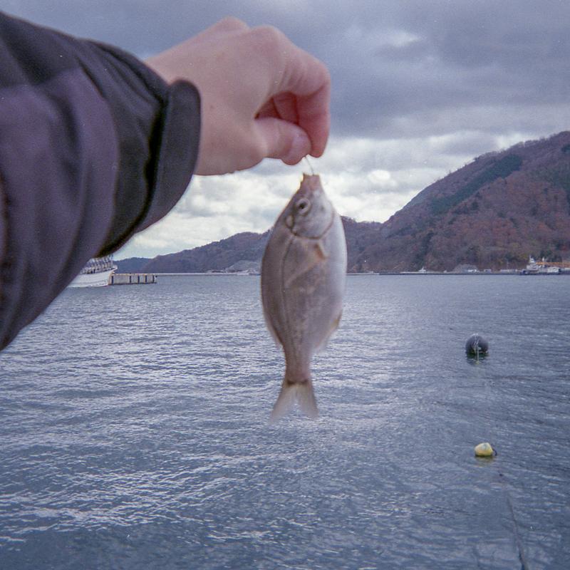 女川港でイワシ入れ食い