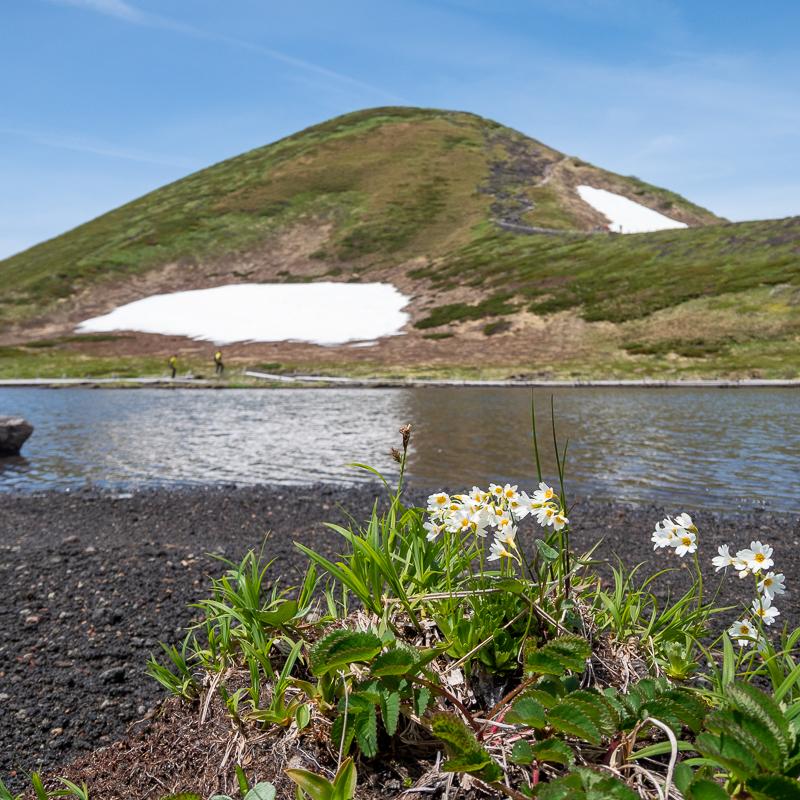 秋田駒ヶ岳登山
